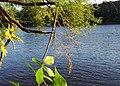 Mississippi River - Fridley, MN - panoramio (3).jpg