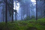 Moist Forrest (30097958666).jpg