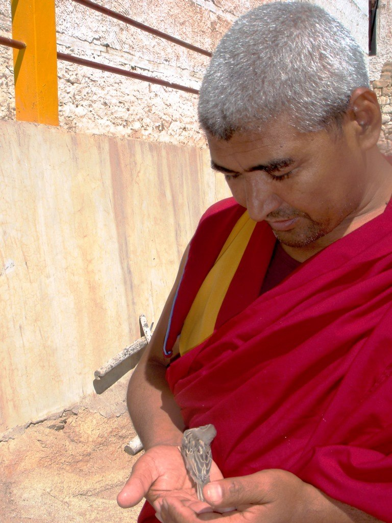 Monk with baby sparrow at Likir Gompa, Ladakh