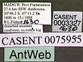 Monomorium termitobium casent0003327 label 1.jpg