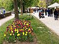 Morges-Fete Tulipe 8.jpg