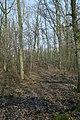 Motte op de Butsberg te Tielt-Winge - 372443 - onroerenderfgoed.jpg