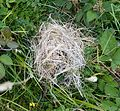 Mouse nest - Flickr - gailhampshire.jpg