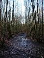 Muddy Footpath, Birchden Wood - geograph.org.uk - 656251.jpg
