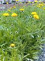 Muna.R flowers.jpg