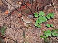Mushrooms under tree.jpg