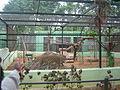 Mysore Zoo - 19.JPG