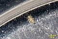 Mystery bug (BG) (13221493053).jpg