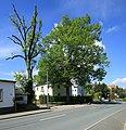 ND Winterlinde (Lutherlinde) in Chemnitz-Klaffenbach..2H1A3235WI.jpg