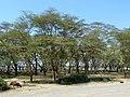 Nakuru, Кения - panoramio.jpg