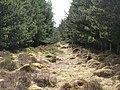 Narrow firebreak in the plantation on Glenwhistle Hill (2) - geograph.org.uk - 762085.jpg