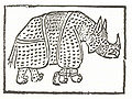 Nashorn.2.jpg