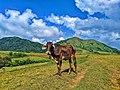 Nasugbu Trilogy in Batangas - 7.jpg