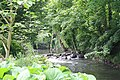 National Botanic Garden,Dublin,Ireland - panoramio (12).jpg