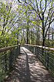 Nationalpark Hainich-Baumkronenpfad-by-Leila-Paul-IMG 3990 02.JPG
