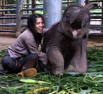 Elephant Nature Park - Navaan, born at the park October 2012, with founder Lek Chailert.