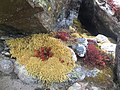 Nepalflowers2.jpg