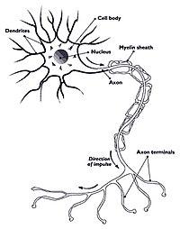 látómező a sclerosis multiplexben