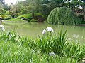 New York Botanical Garden 16.jpg