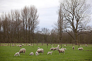 Lower Rhine region - Niederrhein scenery