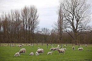 Lower Rhine region - Niederrhein scenery