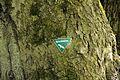 Niedersachsen, Brambostel, Naturdenkmal ND UE 00099 01.jpg