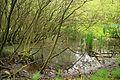 Niedersachsen, Wriedel, Naturdenkmal ND UE 00119 01.jpg