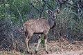 Nkomazi Game Reserve, South Africa (22626757376).jpg