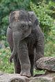 Noorder dierenpark (3987606716).jpg