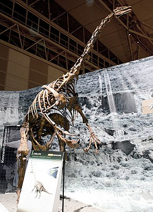 Therizinosaur - Reconstructed skeleton of Nothronychus graffami