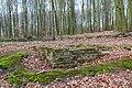 Nottuln, Lager Herbstwald -- 2016 -- 1478.jpg