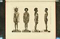 Nova Guinea - Vol 3 - Plate 45.jpg