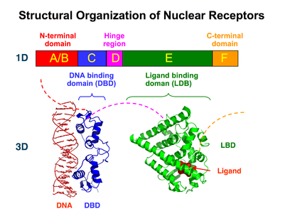 Resultado de imagen para ligand binding domain