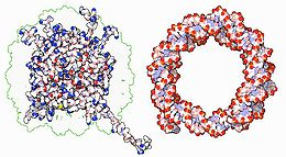 Nucleosome (opposites attracts).JPG