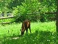 OKC Zoo May 2007 - 51 (497213446).jpg