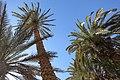 Oasis - panoramio (4).jpg