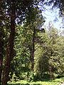 Odessa Main Botanical garden 041.jpg