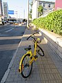 Ofo bikes on the pavement in China.jpg