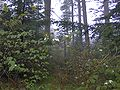 Old-hyatt-ridge-trail-nc1.jpg