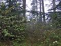 Old-hyatt-ridge-trail-nc1.jpg