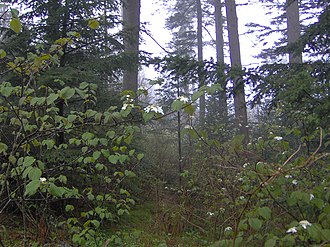 Marks Knob - The remnants of the old Hyatt Ridge Trail near its junction with the Balsam Mountain Trail