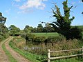 Old Farm Pond at Gostrode Farm - geograph.org.uk - 233084.jpg