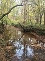 Old Field Creek Johnston Mill Nature Preserve.jpg