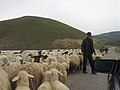 On the drive to Goris, Armenia (28288602225).jpg