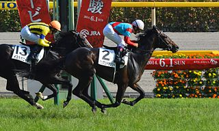One And Only Japanese Thoroughbred racehorse