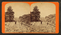 One Thousand Mile Tree, Weber Canon, Utah, by Savage, C. R. (Charles Roscoe), 1832-1909.png