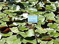 Orto botanico di Napoli 02.jpg