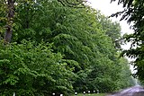 Osa Turiiskyi Volynska-Bobly protected tract-forestry quarter N3 part N26-1.jpg