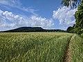 Ostaš (700 m) - pohled od jihu, od zeleně značené pěšiny do Police n. M., na pomezí katastru Žďáru a Bukovic (2).jpg