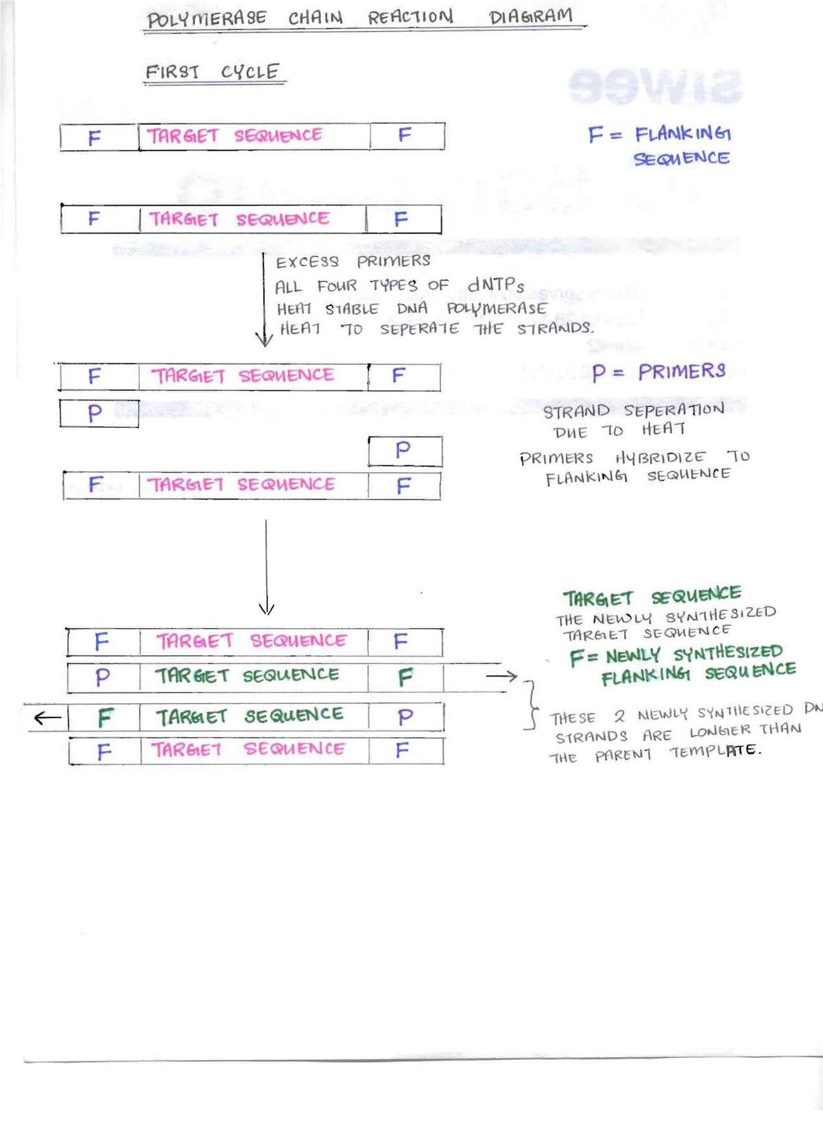 File:PCR diagrams pdf - Wikipedia